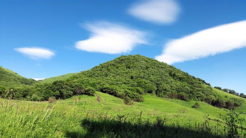 Foresta sulla montagna fotografia stock