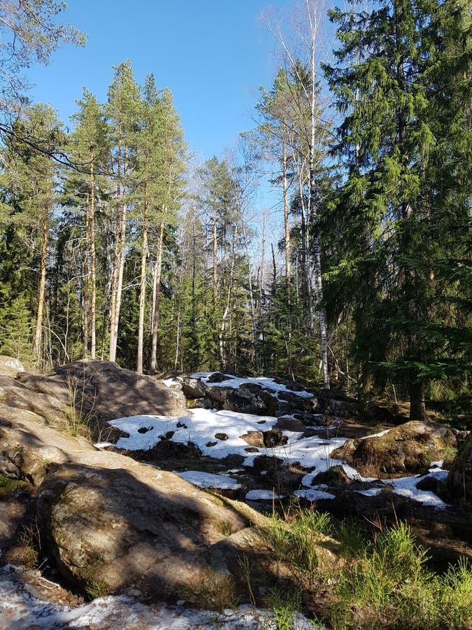 Foresta sulle rocce immagine stock libera da diritti
