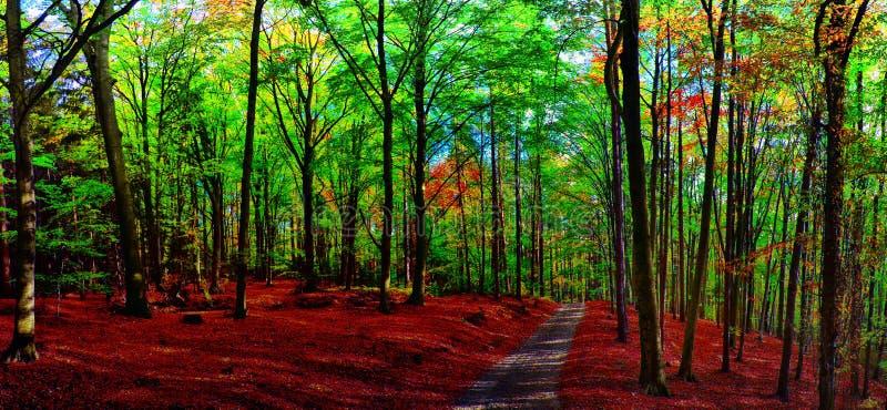Foresta/terreno boscoso degli alberi di faggio con la strada della ghiaia a luce del giorno di pomeriggio di autunno fotografia stock