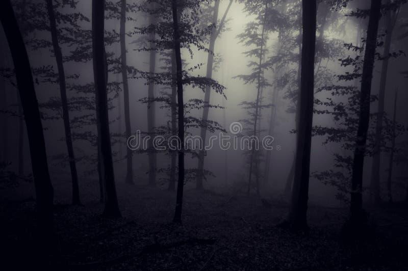 Foresta terrificante spettrale scura con nebbia alla notte fotografia stock libera da diritti