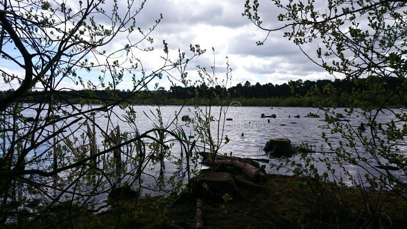 Foresta tre immagine stock