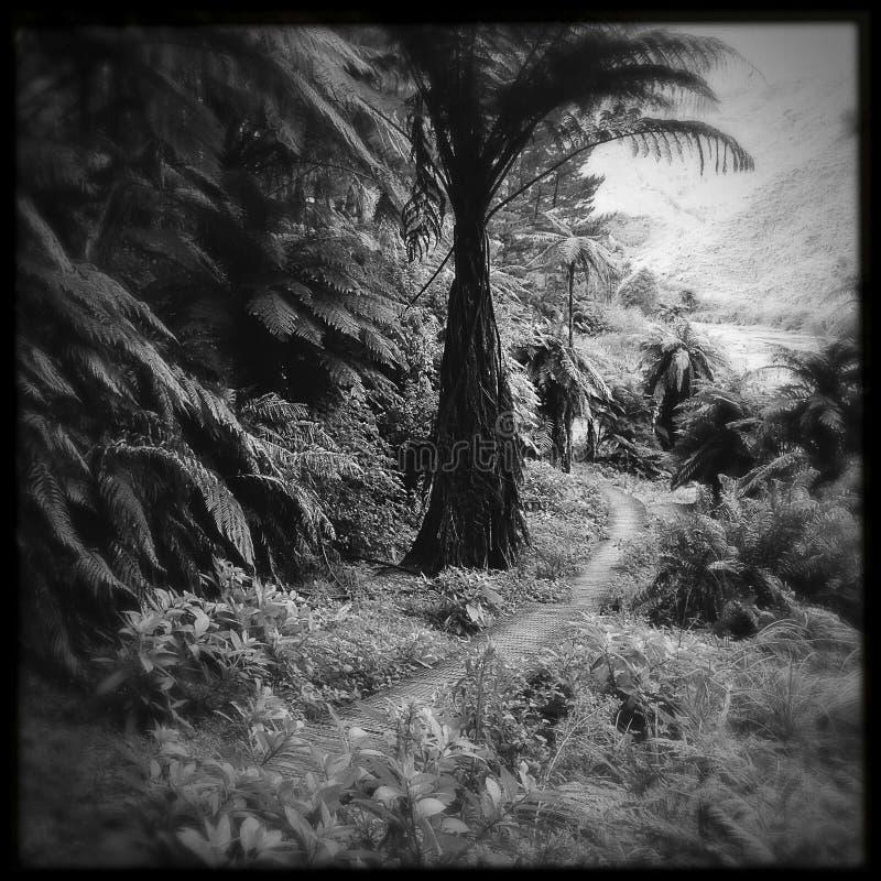 Download Foresta tropicale fotografia stock. Immagine di traccia - 30829568