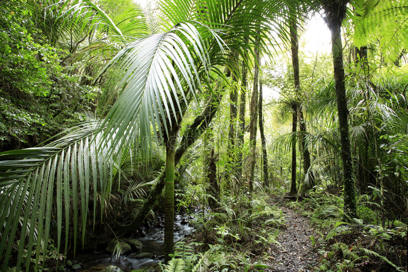 Download Foresta tropicale fotografia stock. Immagine di lush, vegetazione - 3885374
