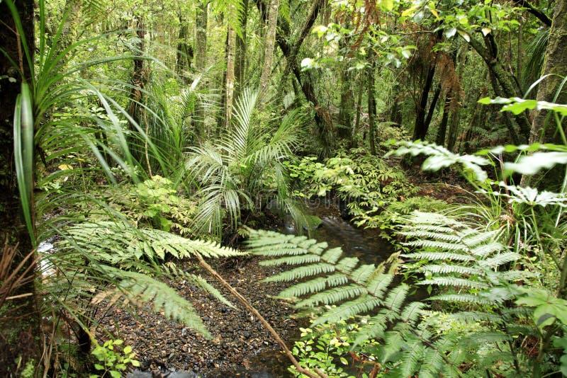 Foresta tropicale immagini stock