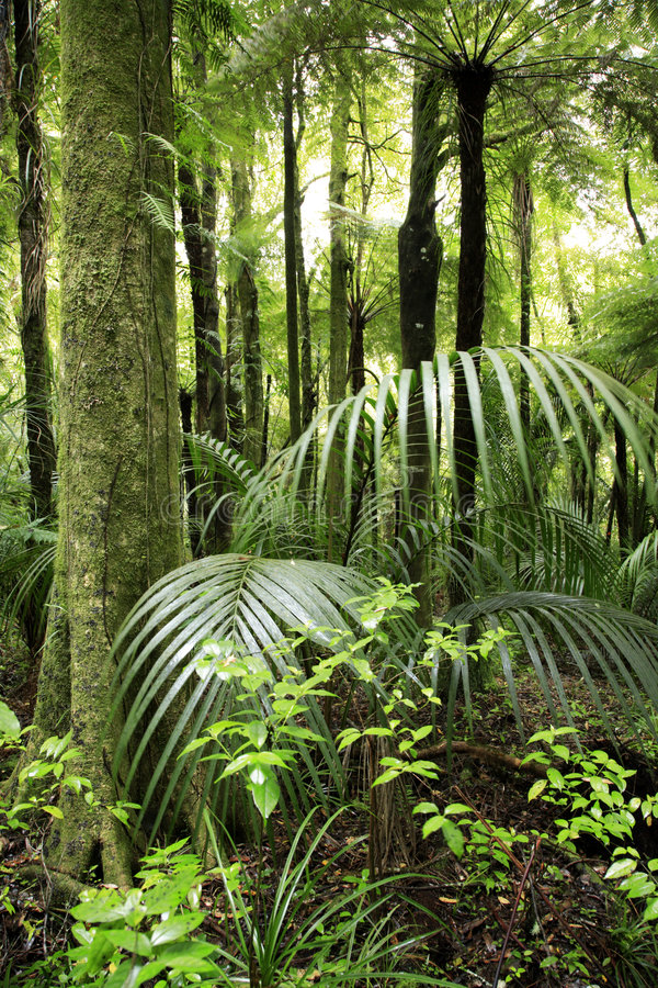 Download Foresta tropicale fotografia stock. Immagine di foresta - 3885410