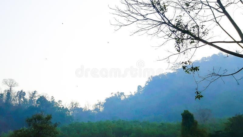 Foresta tropicale immagine stock