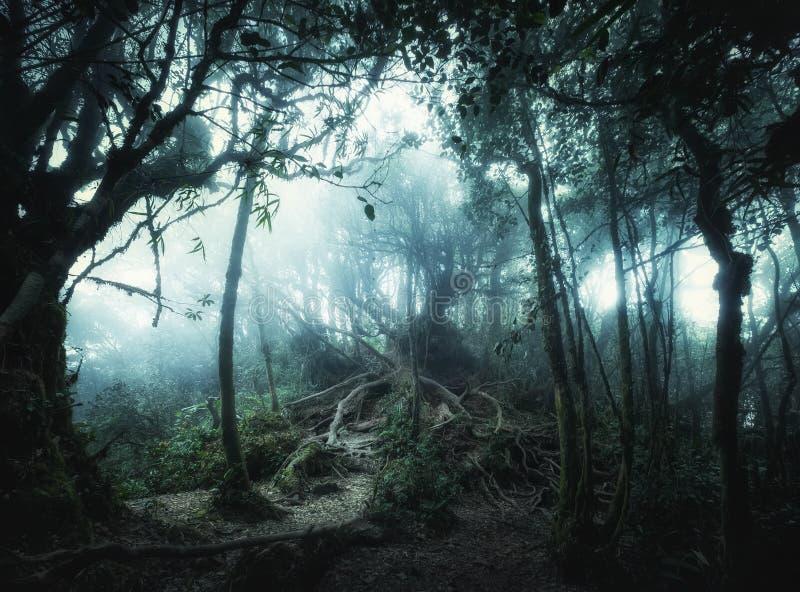 Foresta tropicale della giungla di fantasia nei colori surreali Landsc di concetto immagine stock