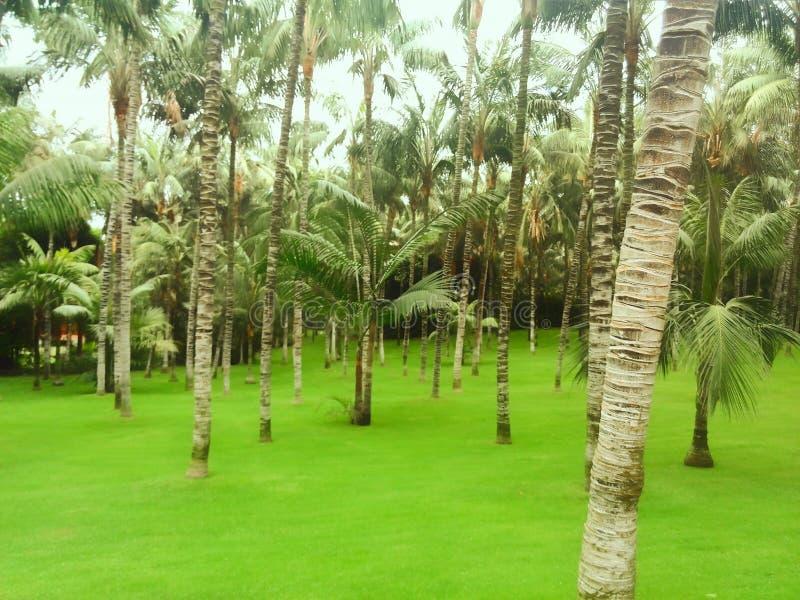 Foresta tropicale della palma fotografie stock libere da diritti