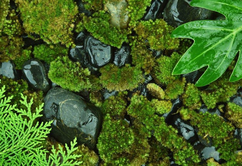 Foresta tropicale, fondo organico naturale fotografie stock