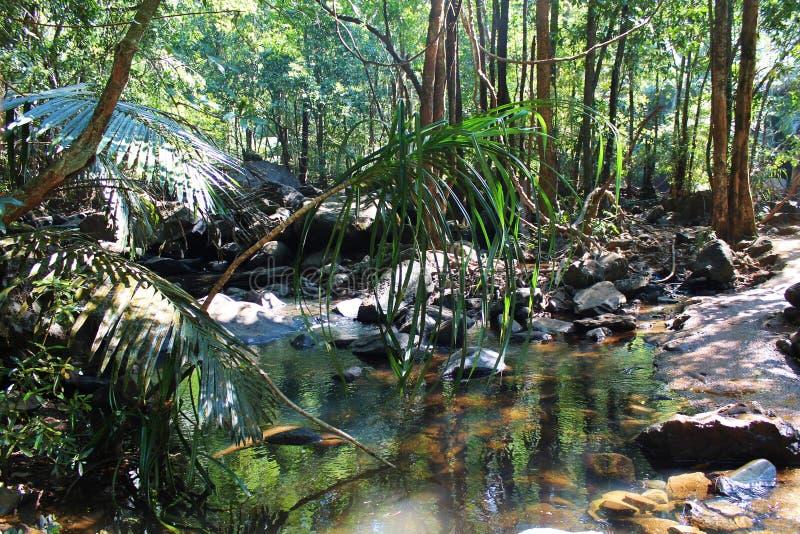 Foresta tropicale - giungla in Goa immagini stock libere da diritti
