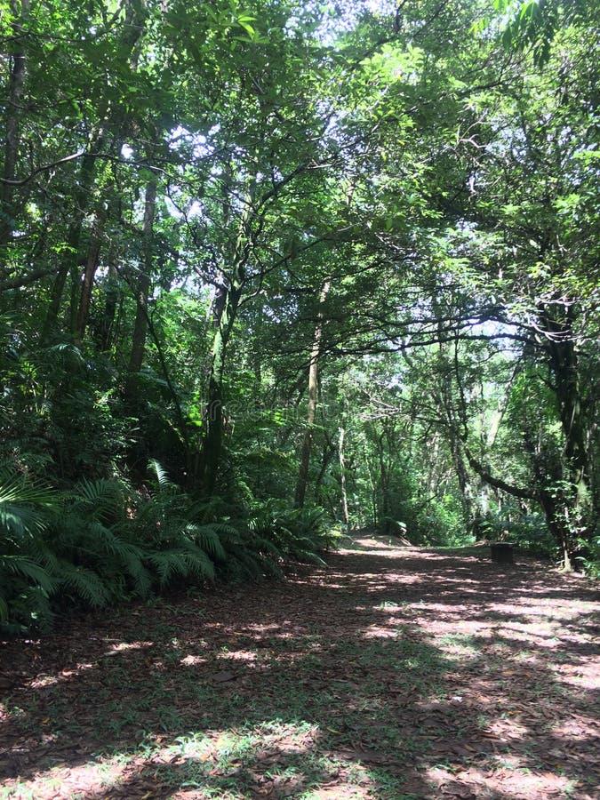 Foresta tropicale nel Sudamerica immagini stock libere da diritti
