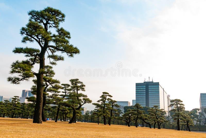 Foresta urbana in mezzo a Tokyo fotografia stock