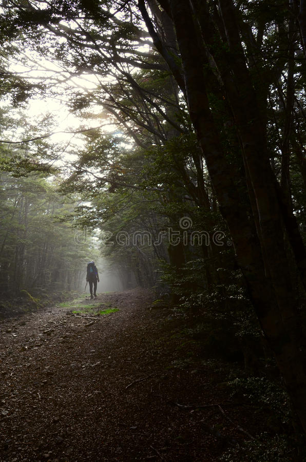Foresta in valle di Cobb immagini stock