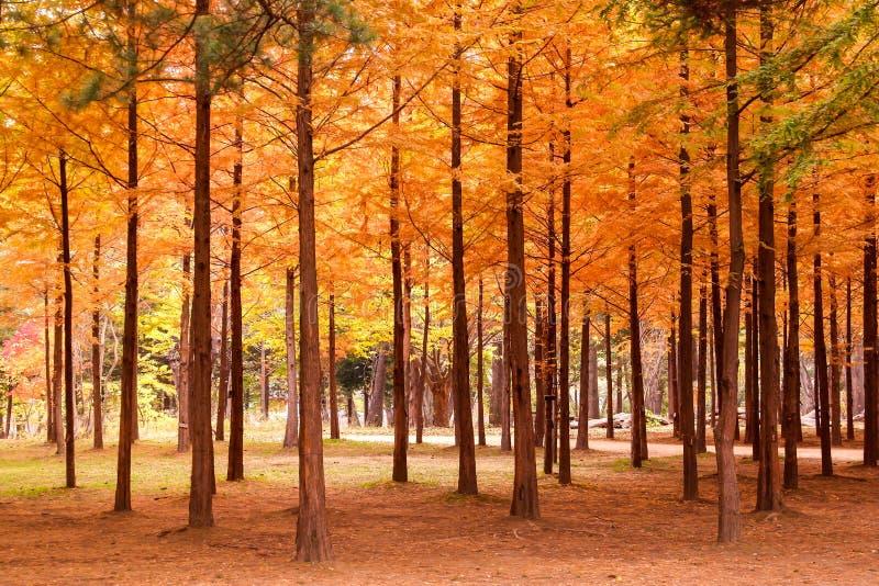 Foresta variopinta di autunno con gli alberi fotografia stock libera da diritti