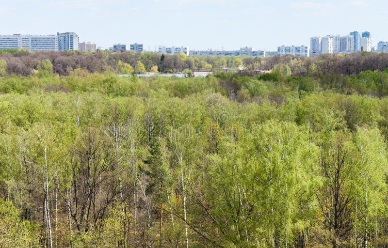 Foresta verde con il lago e la città in primavera fotografia stock