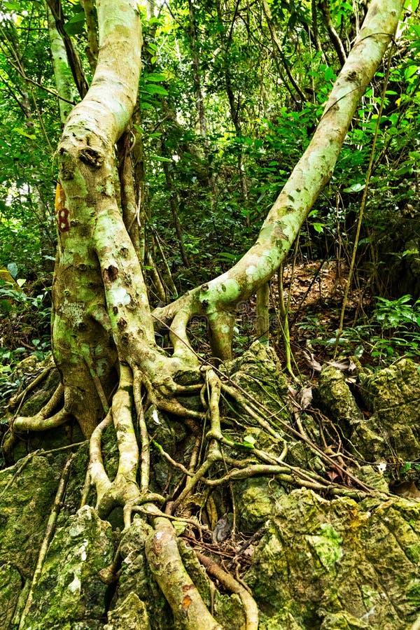 foresta verde delle radici dell'albero immagini stock libere da diritti
