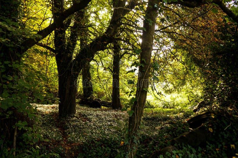Foresta verde di legni fotografie stock