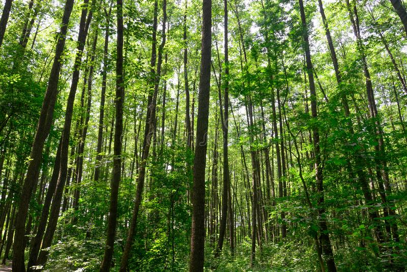 Foresta verde in estate fotografia stock