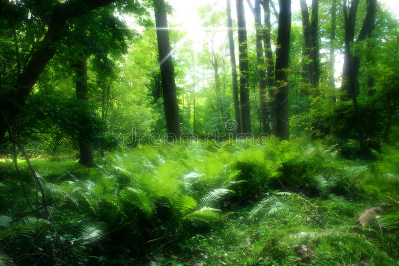 Foresta verde fertile fotografia stock