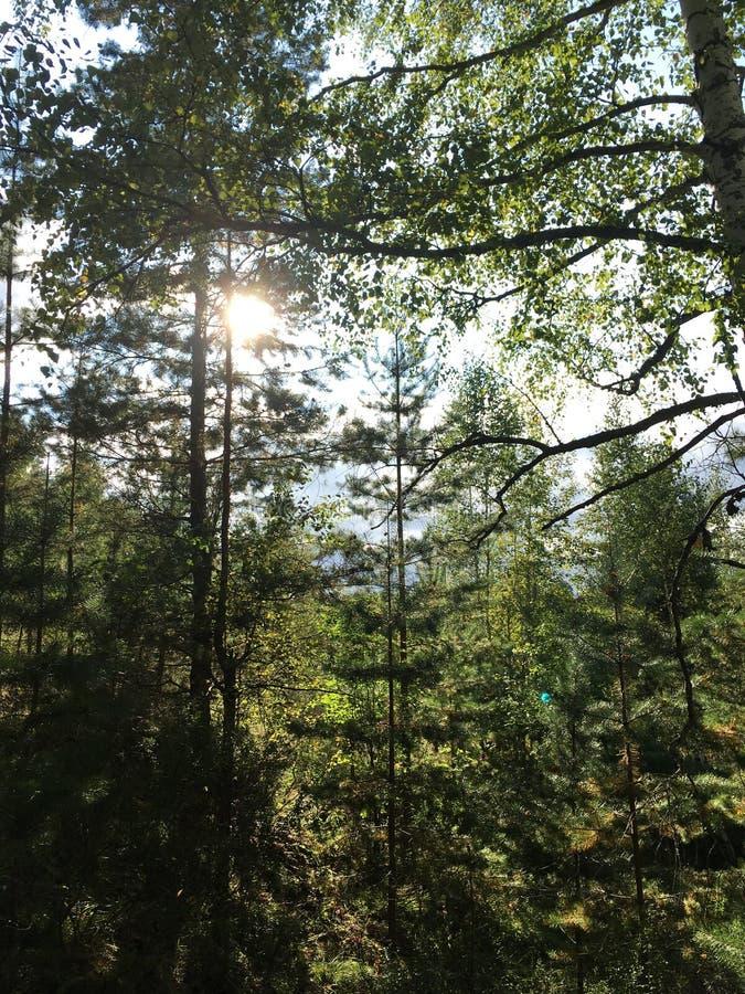 Foresta verde mista di estate, tronchi di albero e cespugli immagini stock libere da diritti