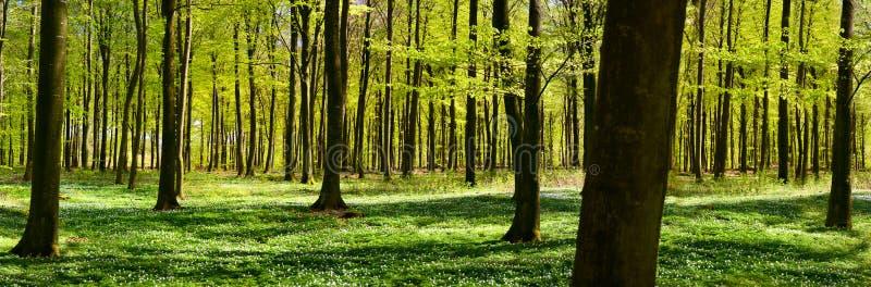 Foresta verde in primavera fotografia stock
