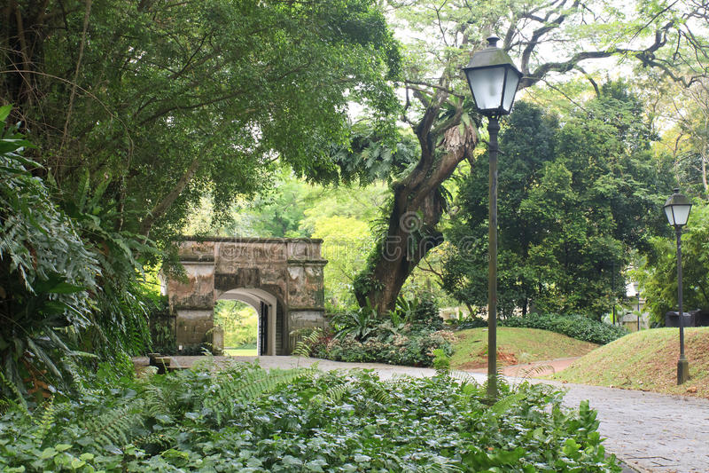 Foresta verde, Singapore immagine stock libera da diritti
