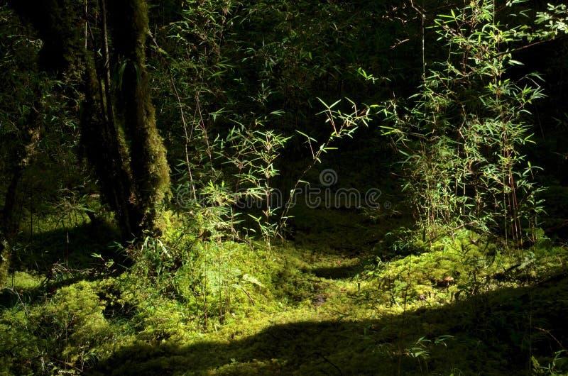 Foresta vergine dell'ombra di bambù, valle di jiuzhai fotografia stock