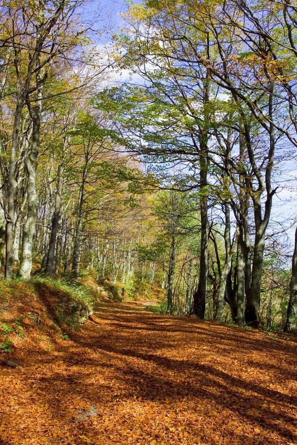Foresta vicino alla sosta di nationa dei laghi Plitivce, Croatia fotografia stock