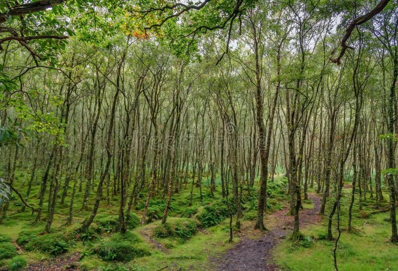 Foresta vicino a Glendalough, Irlanda immagini stock