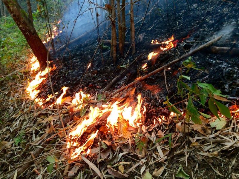 ForestBurns immagine stock