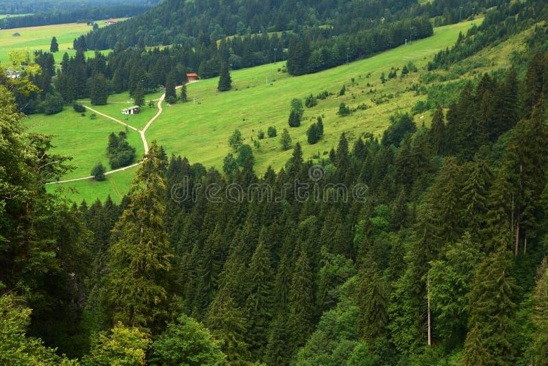 Foreste In Alpi Immagine Stock