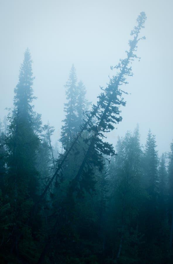 Foreste della montagna fotografia stock