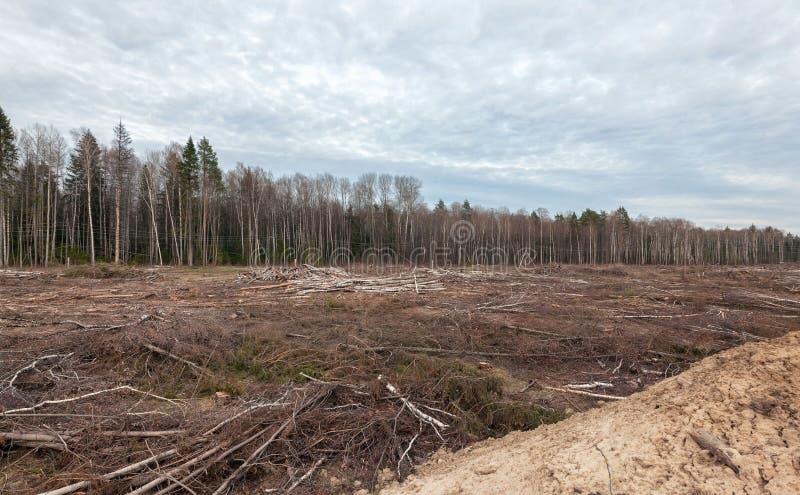 Foreste di abbattimento vicino alla cava di sabbia immagine stock libera da diritti