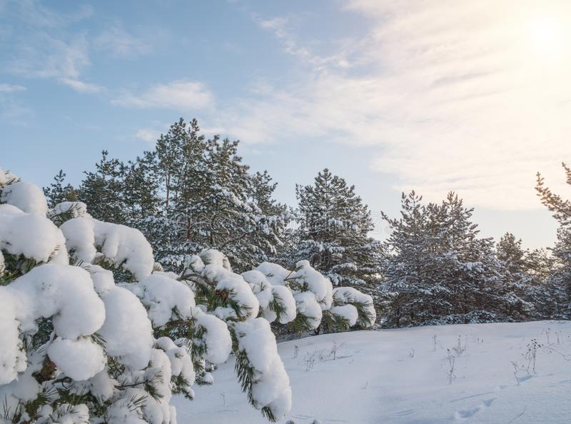 Foreste di conifere ricoperte di neve contro il cielo azzurro Una fiaba al giorno d'inverno Aspettando il miracolo del Natale immagine stock libera da diritti