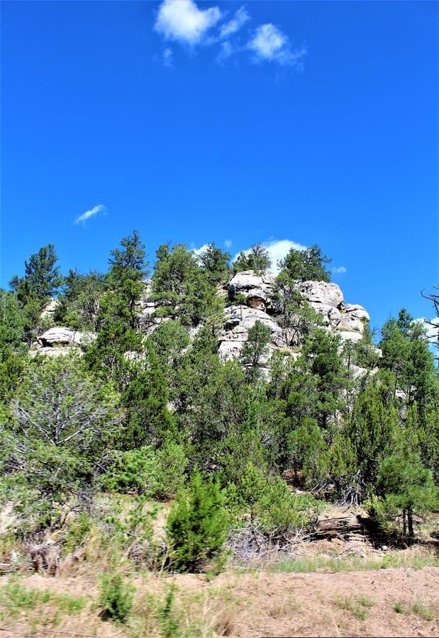 Foreste nazionali di Apache Sitgreaves, Arizona, Stati Uniti immagini stock libere da diritti