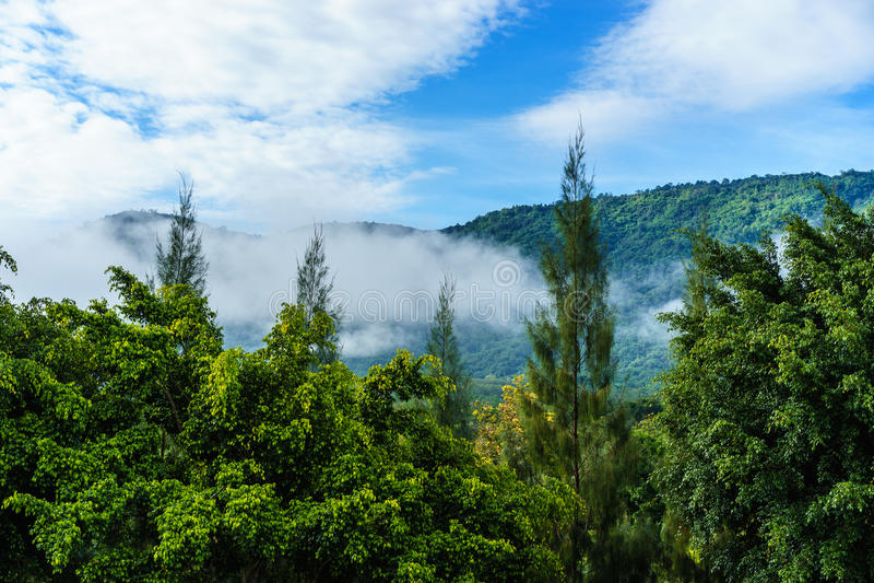 Foreste pluviali riempite di foschia fotografia stock