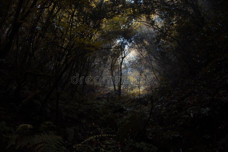 Foreste spesse profonde di autunno con l'ambiente scuro immagini stock