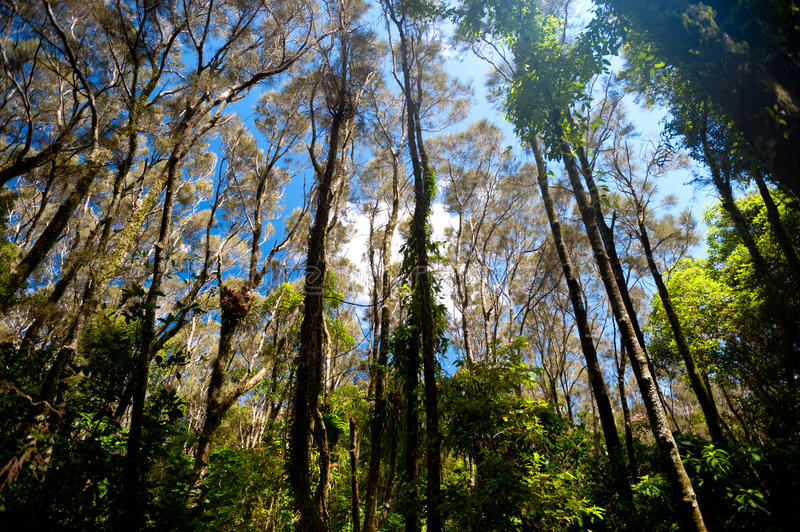 Download Forested Area Around Moonee Beach, Australia Stock Photo - Image of forest, country: 28002770