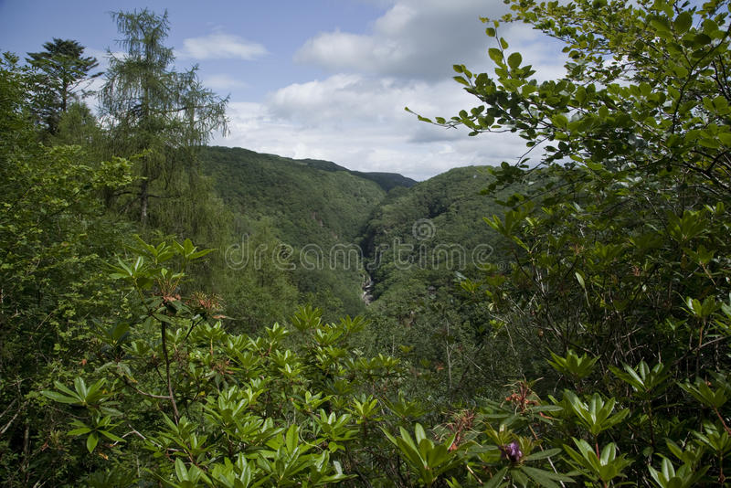 Forested countryside stock images