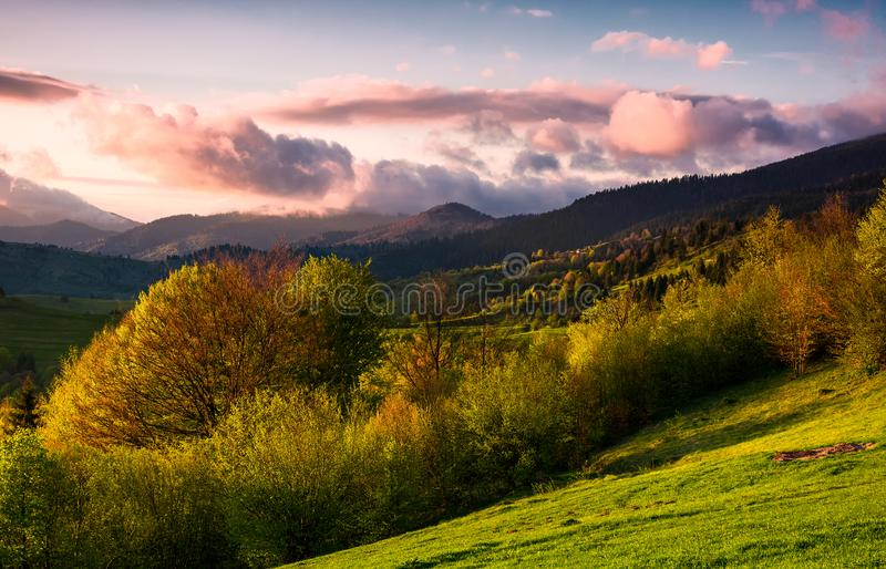 Forested hill at cloudy sunset in springtime. Beautiful scenery in Carpathian mountains. location - Mizhirya district of TransCarpathian region, Ukraine stock image