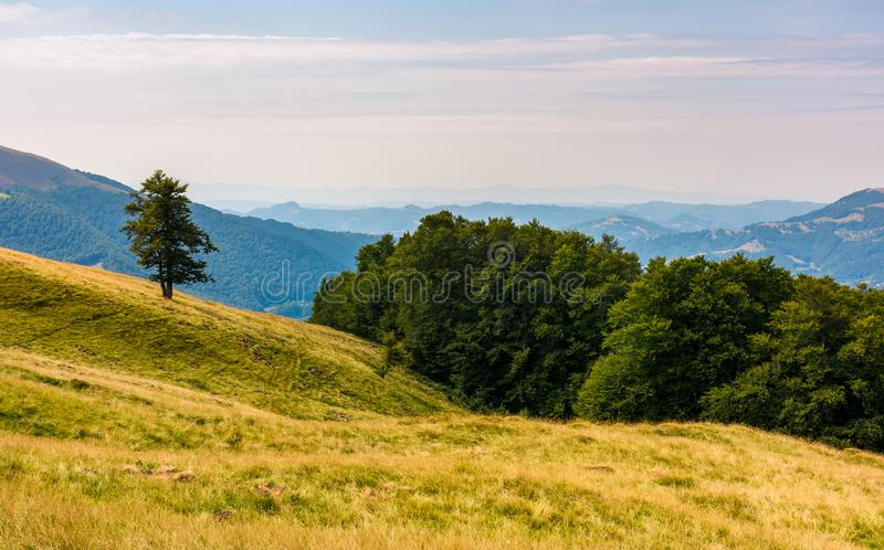 Forested hills of Carpathian mountains stock photos