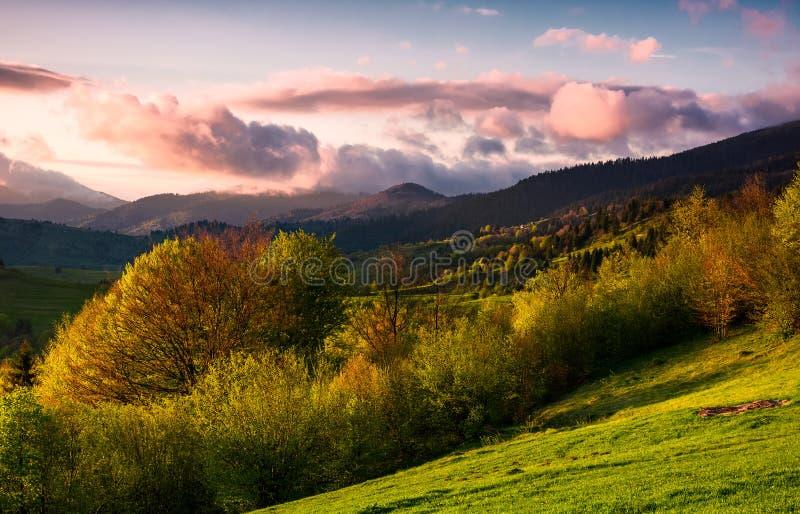 Forested kulle på den molniga solnedgången i vår fotografering för bildbyråer