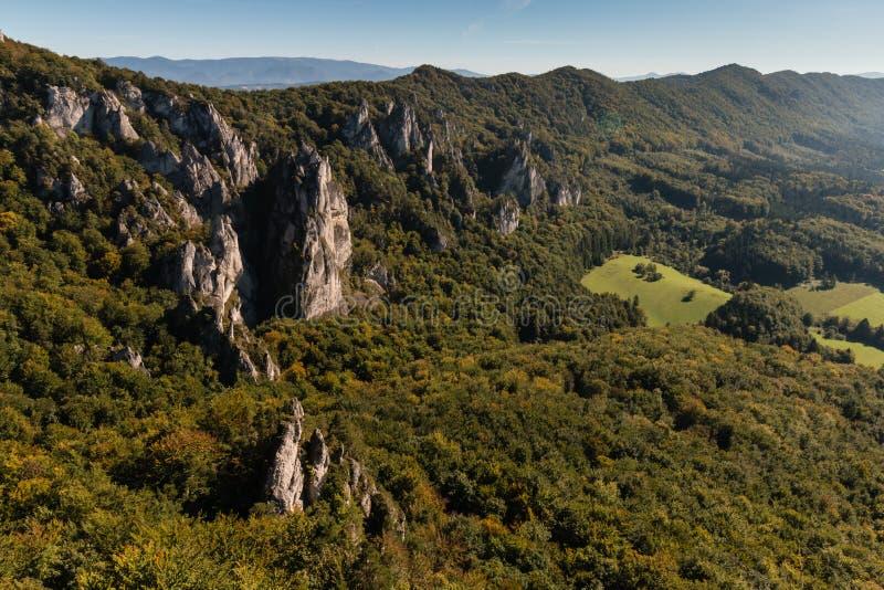 Forested lutningar i Carpathian berg royaltyfri bild