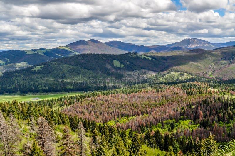 Forested Montana Mountain Scene Near Helena royaltyfria bilder
