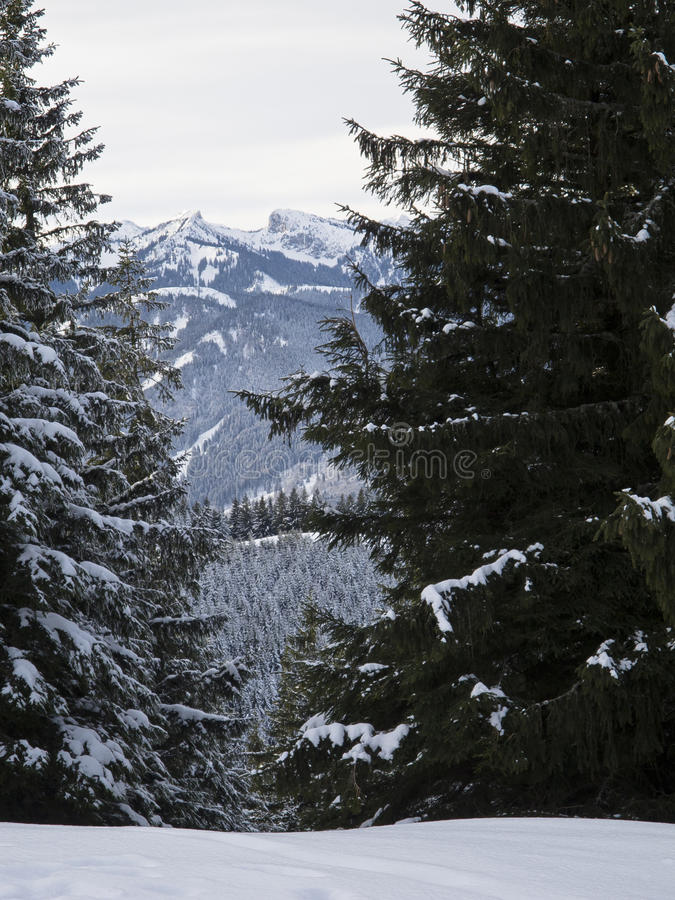 Forested mountain in winter stock image