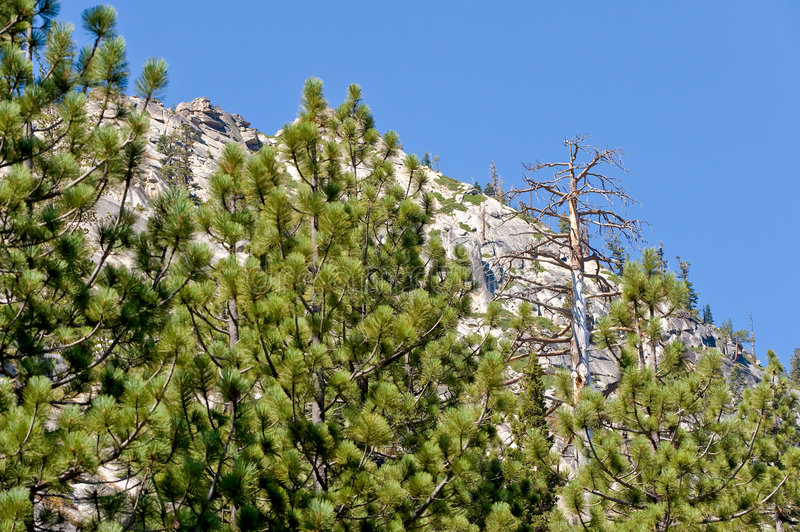 Download Forested mountainside stock image. Image of blue, rugged - 6948489