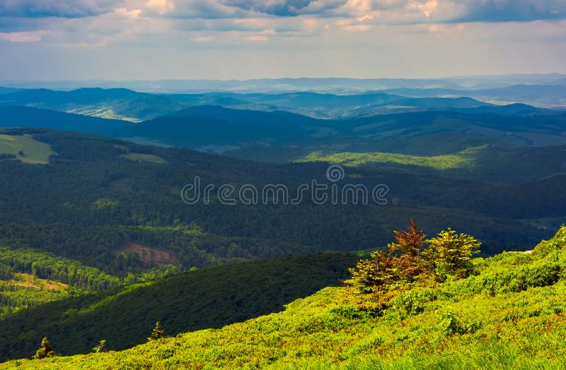 Forested rolling hill on a cloudy day royalty free stock photography