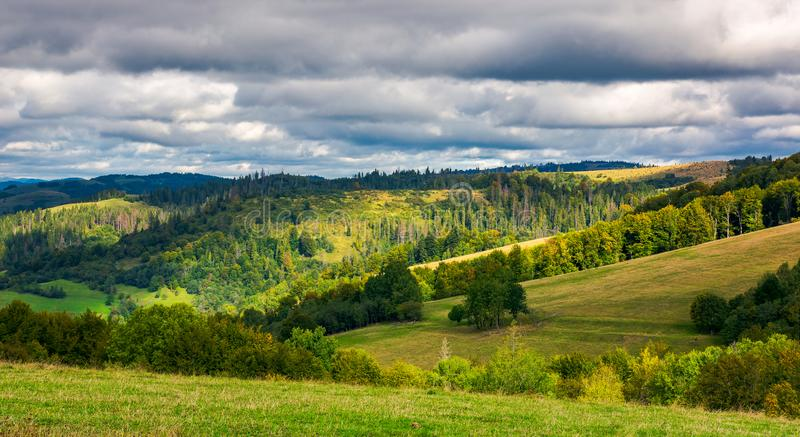 Forested rolling hill on overcast day stock images