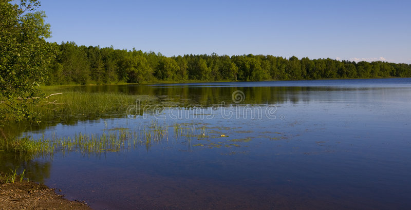 Forested Shoreline. A forested shoreline of a lake in the North woods of Minnesota royalty free stock photos