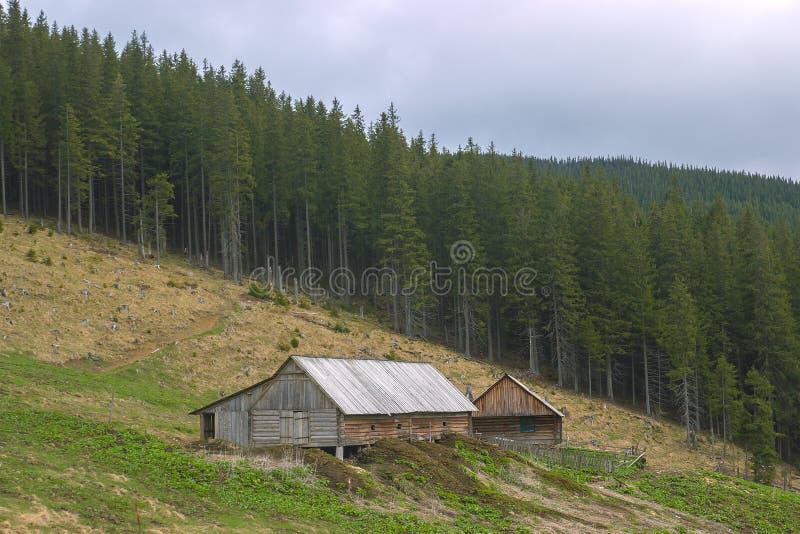 Forester& x27; cabine de s na floresta imagem de stock royalty free